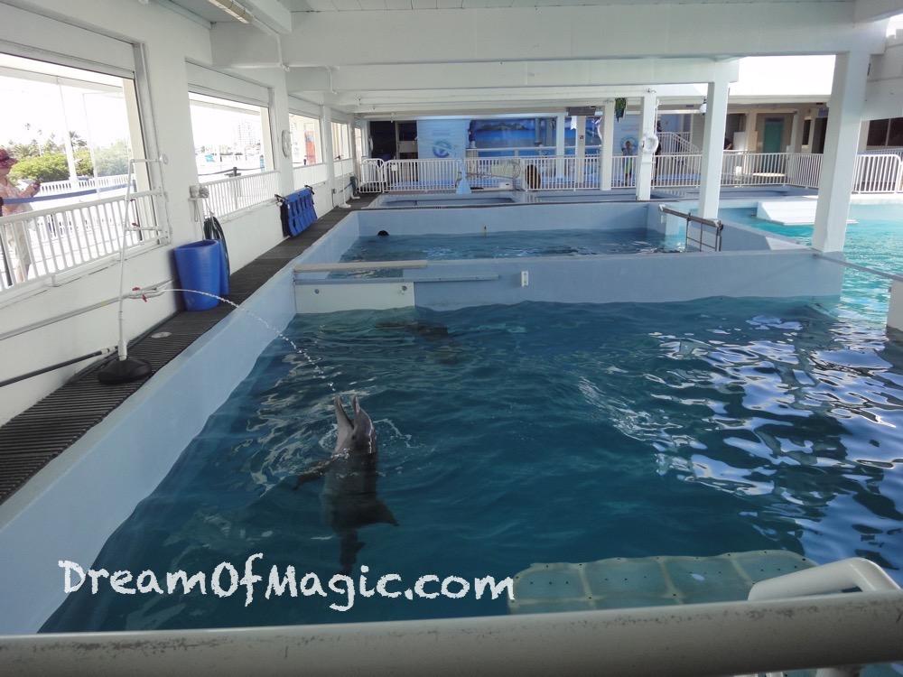 Clearwater Marine Aquarium 2014-10-28-15-11-08 [WX1]