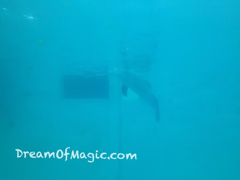 Clearwater Marine Aquarium 2014-10-28-16-33-21 [iPhone 6]