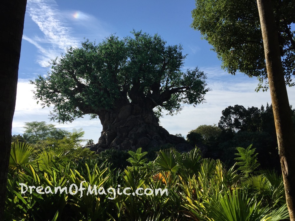 Discovery Island 2014-10-22-10-20-14 [iPhone 6]