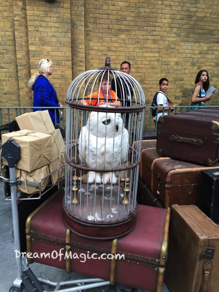 Hogwarts Express 2014-10-20-18-03-54 [iPhone 6]