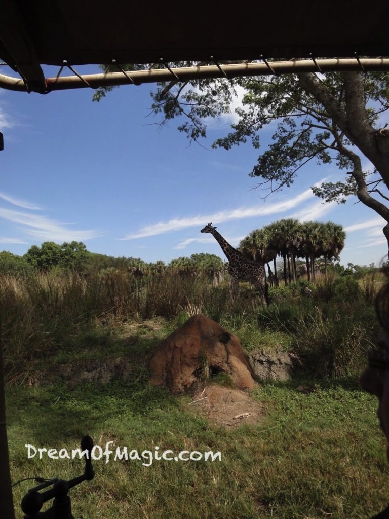 Kilimanjaro Safaris 2014-10-22-12-04-32 [WX1]
