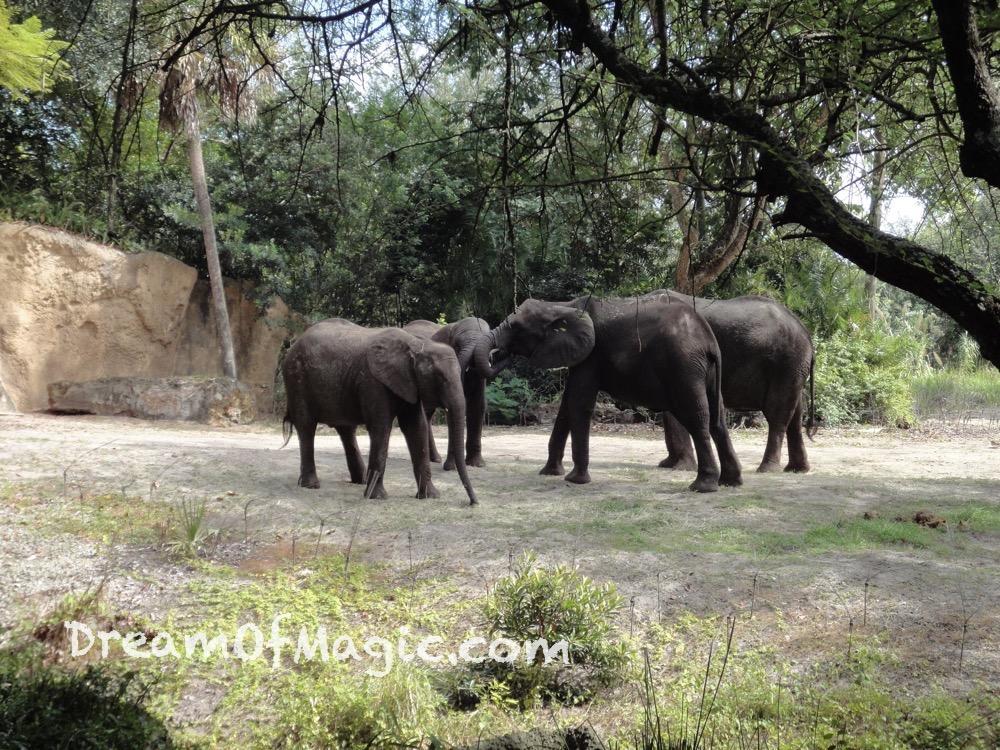 Kilimanjaro Safaris 2014-10-22-12-07-59 [WX1]