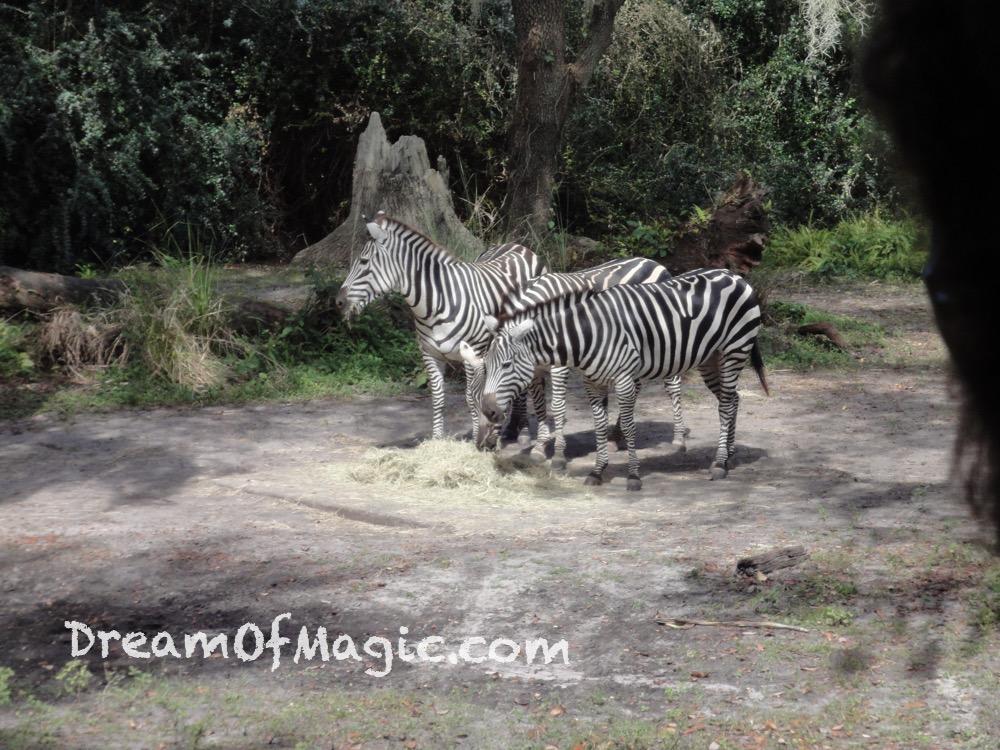 Kilimanjaro Safaris 2014-10-22-12-15-14 [WX1]