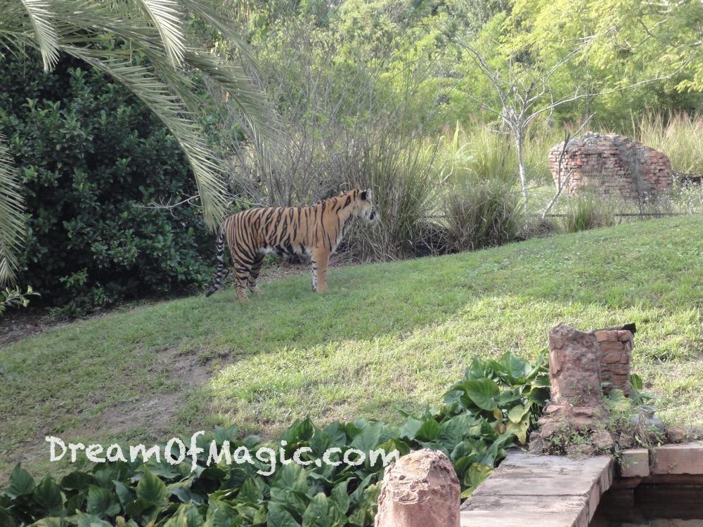 Maharajah Jungle Trek 2014-10-30-16-26-27 [WX1]